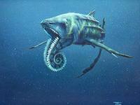 морские хищники фото